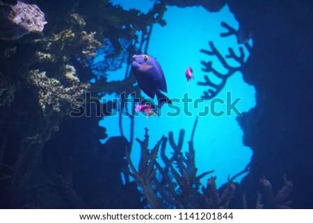 Aquarium Fish Background #1141201844