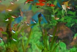 aquarium fish, tropical fish