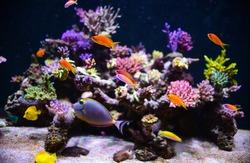 aquarium for background