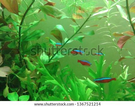 aquarium, freshwater fish #1367521214
