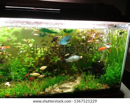 aquarium, freshwater fish #1367521229
