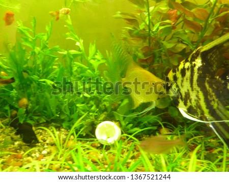 aquarium, freshwater fish #1367521244
