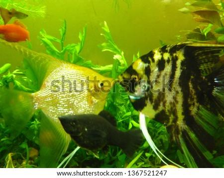 aquarium, freshwater fish #1367521247