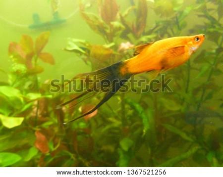 aquarium, freshwater fish #1367521256