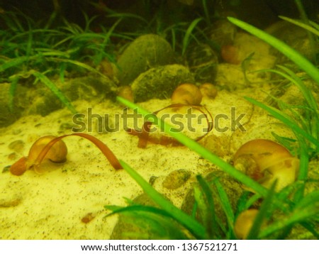 aquarium, freshwater fish #1367521271