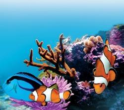 aquarium marine fish under the blue sea with corals
