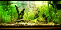 Aquarium representing natural biotop of European nature. Cold water tank with live green plants. Science, research, education, zoo laboratory. Environmental conservation concept