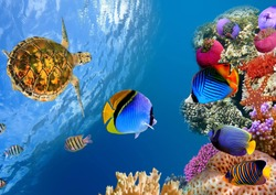 Aquarium Sealife Underwater Fish Coral Sea Water
