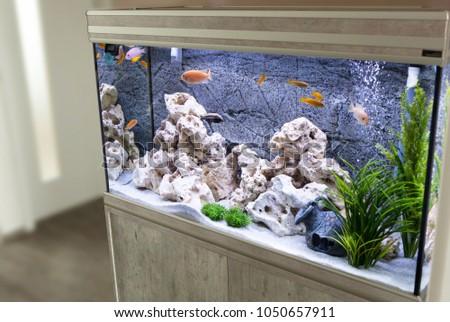 Aquarium with cichlids fish from lake malawi #1050657911