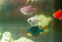aquarium with fish, colored tropical fishes in aquarium, exotic fishes in aquarium