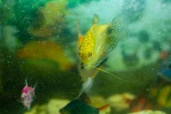 aquarium with fish, tropical fish in aquarium, exotic fish in aquarium