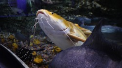 Aquarium with large variety of fish. Beautiful fish in the aquarium at the national zoo in Dubai