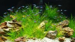 aquarium with neon