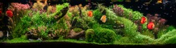 Aquarium with tropical fish jungle landscape with nature forest design and aquarium tank with variety plants fish drift wood rock and waterfall