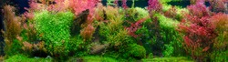 Aquarium with tropical fish jungle landscape with nature forest design and aquarium tank with variety plants fish drift wood rock stone and waterfall