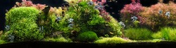 Aquarium with tropical fish jungle landscape with nature forest design tank with variety plants fish drift wood rock stone, underwater landscape with a variety of aquatic plants inside.