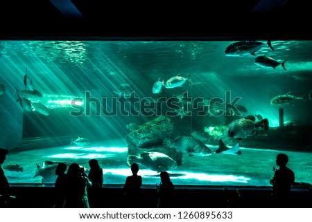 aquariums landscape view #1260895633