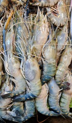 aquatic crustaceans are mainly saline water prawn but they come to less salted water in the breeding season.