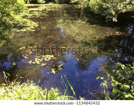 Aquatic milfoil in pond #1134845432