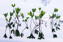 aquatic plants in  Forest Lake