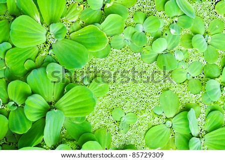 Aquatic Weeds On The Water Green Texture