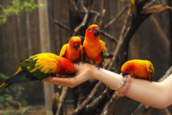 ara parrots sit on human hands close up photo on jungle outdoor background
