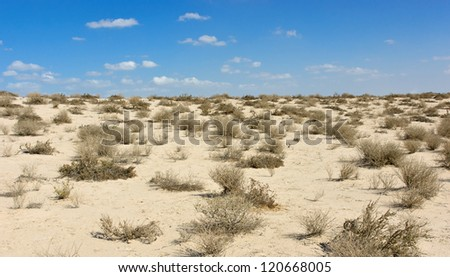 Arabian desert at noon
