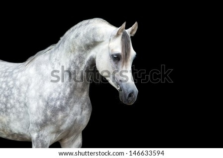 Arabian Horse Backgrounds Arabian Horse Head Isolated on
