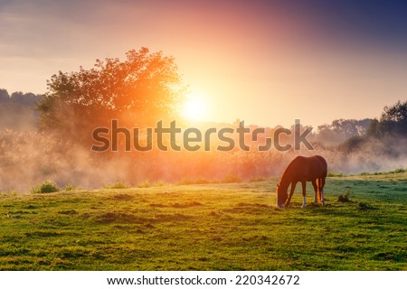 Stock Photo Arabian horses grazing on pasture at sundown in orange sunny beams. Dramatic foggy scene. Carpathians, Ukraine, Europe. Beauty world.