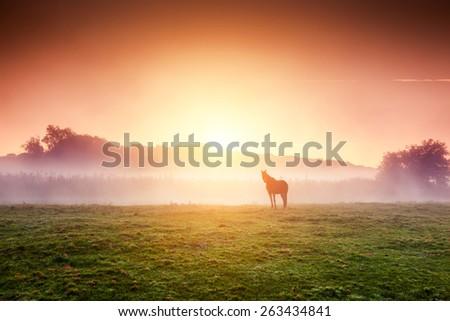 arabian horses grazing on...