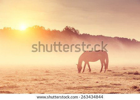 Stock Photo Arabian horses grazing on pasture at sundown in orange sunny beams. Dramatic foggy scene. Carpathians, Ukraine, Europe. Beauty world. Retro style filter. Instagram toning effect.