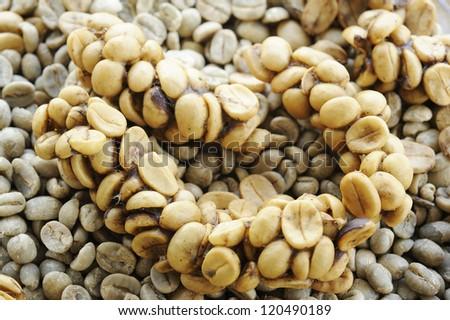 Arabica - coffee  arabica - coffee beans - coffee beans by viverridae - coffee seed - viverridae made coffee seed