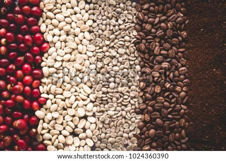 Arabica coffee Steps Coffee Beans Coffee in Asia