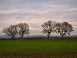 Arable farmland and silhouetted leafless trees at dusk at the end of a cold winter day with mist forming. Taken in Cheshire, England, UK.