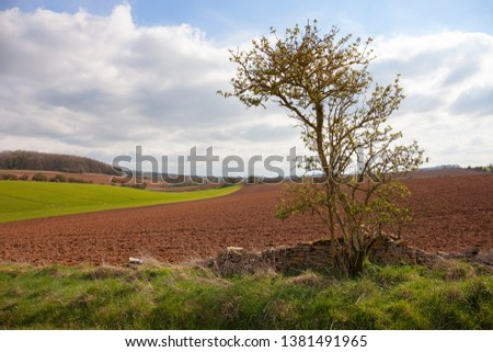 Arable farmland near Taddington, Cotswolds, Gloucestershire, England #1381491965