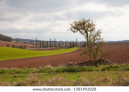 Arable farmland near Taddington, Cotswolds, Gloucestershire, England #1381492028
