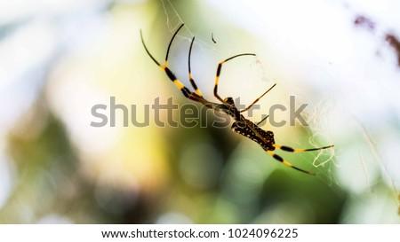 arachnid in the garden.