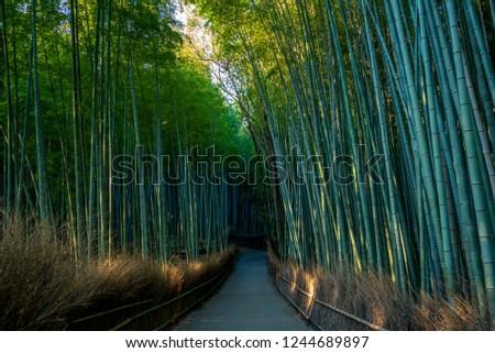Arashiyama Bamboo groove in kyoto, japan