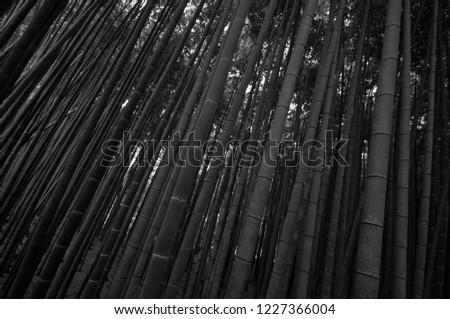 Arashiyama bamboo groove in white and black