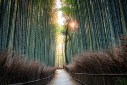 Arashiyama Bamboo Grove forest and famous path in Kyoto Japan. Soft morning shot golden hour with sun bursting through the bamboo stalks