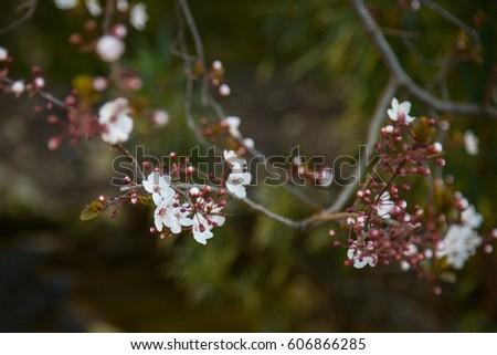 Shutterstock Arbol en flor, Primavera