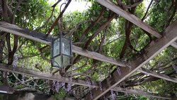 arbor with a wrought-iron lantern, a pergola braided by wisteria, southern landscape. Italy