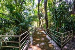 Arboretum Trail in Queen Sirikit Botanic Garden, Chiang Mai Province.