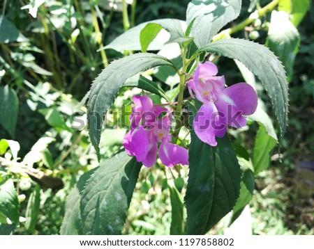 Arboriculture, garden, botanical, organic, herbal flowers plant