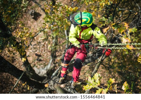 Arborist man cutting a branches with chainsaw and throw on a ground. The worker with helmet working at height on the trees. Lumberjack working with chainsaw during a nice sunny day.  Stock photo ©