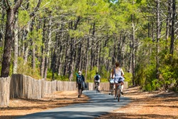 Arcachon Bay, France. Bike path in the Gascony forest near the dune of Pilat in La Teste