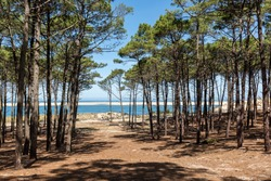 Arcachon Bay, France. Gascony forest and sandbank of Arguin