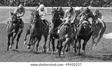 ARCADIA, CA - MAR 20: A field of thoroughbreds takes the far turn and heads down the homestretch in a maiden race at Santa Anita Park on Mar 20, 2010 in Arcadia, CA.