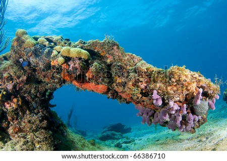 Arch formed by coral on reef in south east Florida.