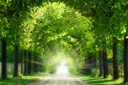 arch of branches with green leaves of old trees in sunshine, beautiful green park idyll in summertime with copy space, light at the end of the tunnel, natural park landscape background